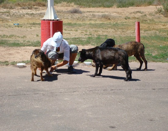 Pet Sitter Dog Walker Pet Care Services San Diego Ca